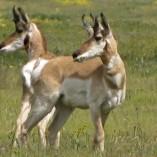 Friends of the Carrizo Plain image