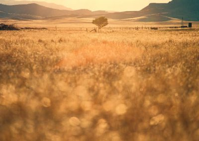 grassland-sunset-by-richard