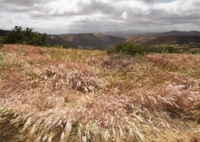 wind-in-the-grass-by-irene-reti