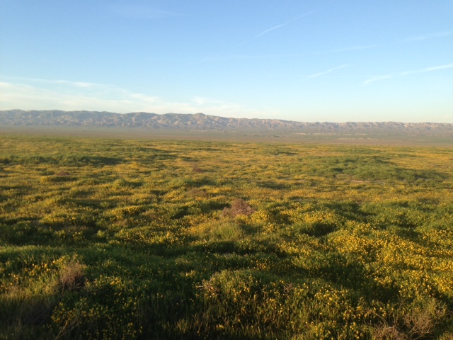 Carrizo Plain March 12 2017